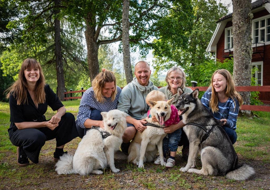 Volunteering with animals in Sweden