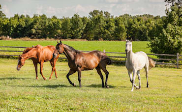 How To Attract Buyers for Your Horse Property