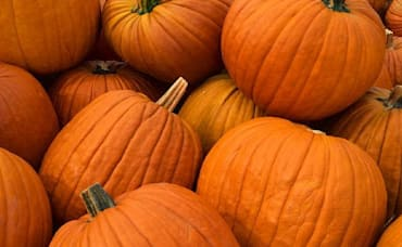 Halloween Happenings in Maplewood, South Orange, Millburn/Short Hills Area