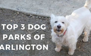 The Top 3 Dog Parks in Arlington