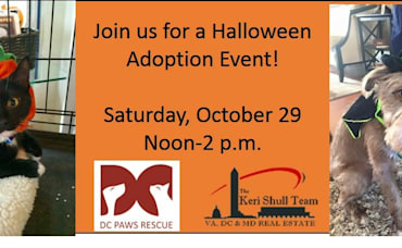 Join Us for Our Halloween Pet Adoption Event