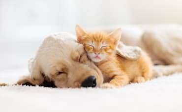 Make Your Home More Pet Friendly