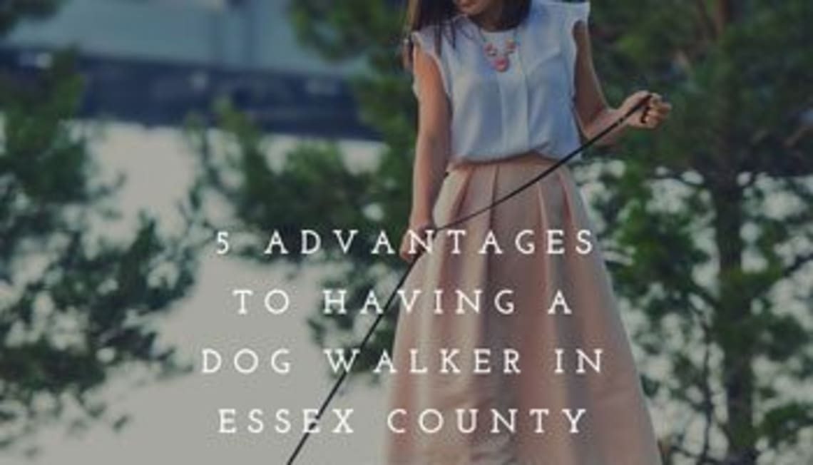 5 Advantages to Having a Dog Walker In Essex County