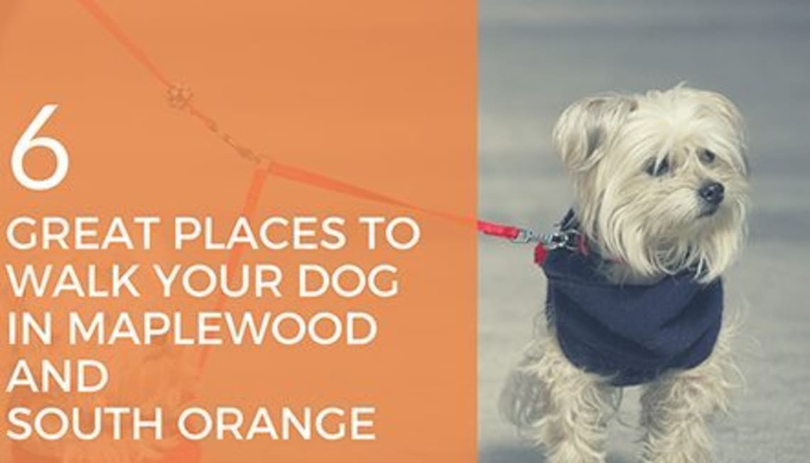 6 Great Places to Walk Your Dog in Maplewood and South Orange