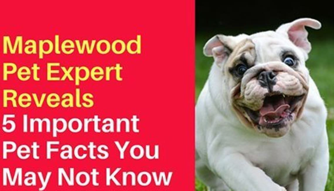 Maplewood Pet Expert Reveals 5 Important Pet Facts You May Not Know