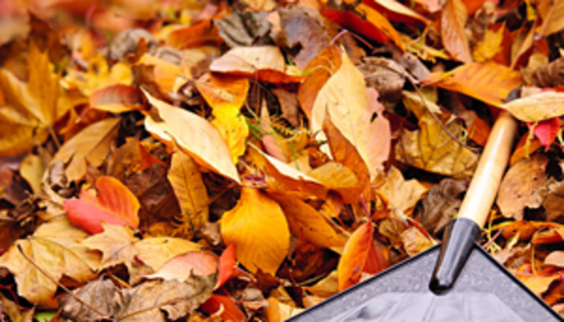 Fall Landscaping and Curb Appeal