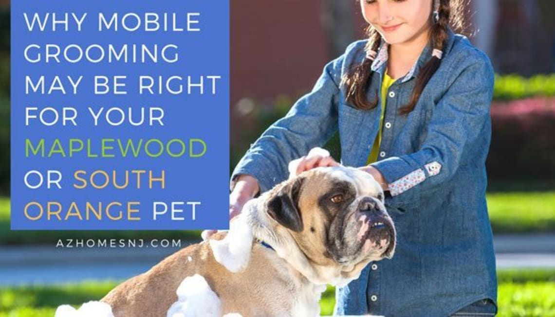 Why Mobile Grooming May Be Right for Your Maplewood or South Orange Pet