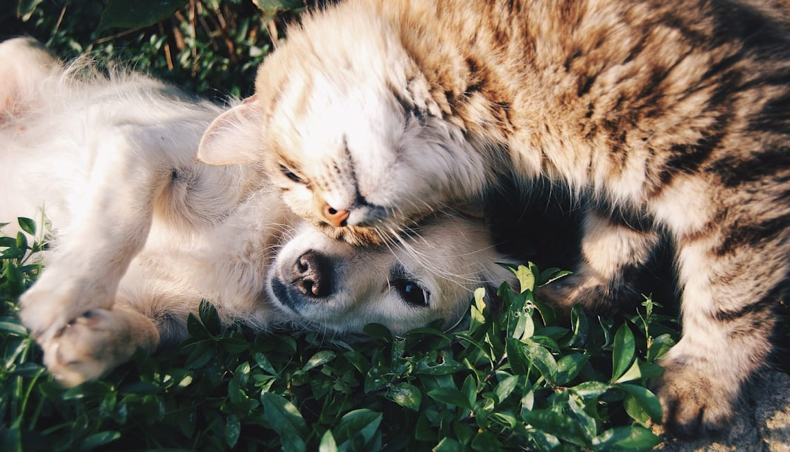 3 Essential Tips For Buying a Home as a Pet Owner