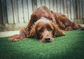 How To Have a Dog-Friendly Yard