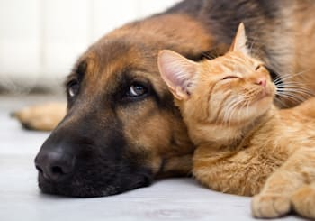 Where to Adopt a Pet in North County