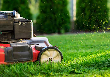 5 Steps for Having a Beautiful Boston Lawn