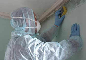 Clearing Mold Away from Your Cambridge Home