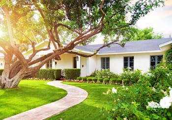Buying a Home With Big Trees