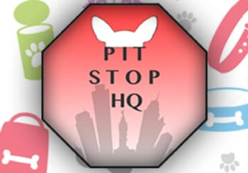 Pit Stop HQ: South Philly's Puppy Paradise