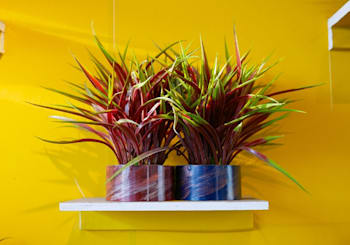 How To Move Your Potted Plants