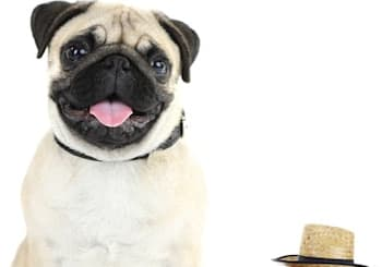 10 Tips For Moving With Pets