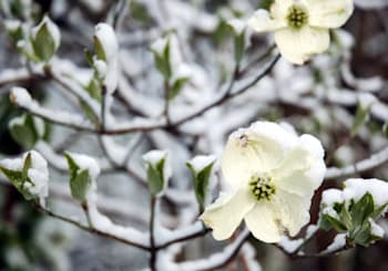Georgia Mountain Dogwood Winter…What the Heck Is it??