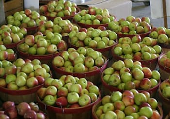 Georgia Apple Festival