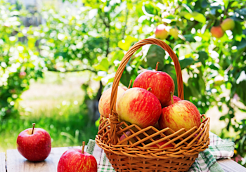 9 Local Spots for Apple Picking