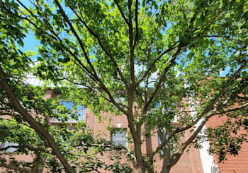 Just Sold: 2337 Wallace St #a, Philadelphia
