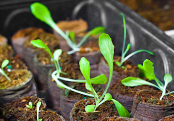 How Does Your Home Garden Grow?