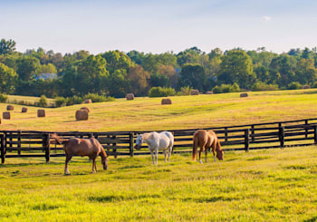 Affording an Equestrian Ranch or Home