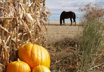 Fallbrook and Bonsall Home to Small Town Halloween Fun and Horses
