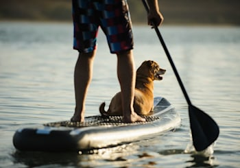 Pet-Friendly San Diego Staycations
