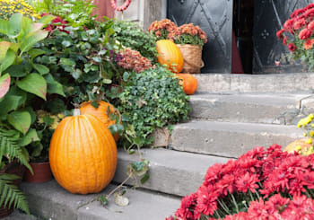 Create Fall Curb Appeal With These North County Resources