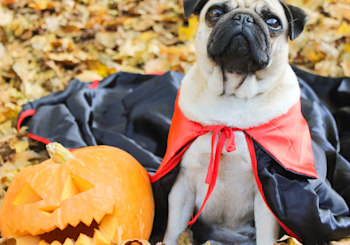 Family-Friendly Halloween Events in North County