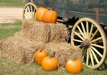 Best Fall Activities in Howard County