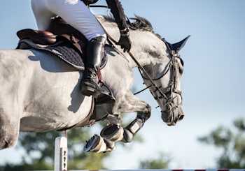 Live the Equestrian Life in Rancho Santa Fe
