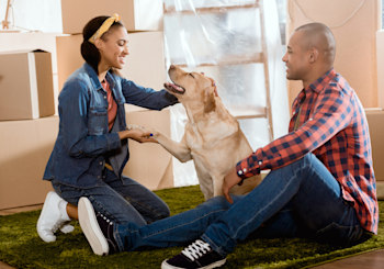 5 Easy Tips For A Smooth Move With Dogs