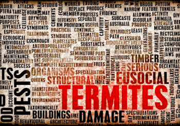Termite Tutorial: Don't Let Your Largest Investment Get Eaten