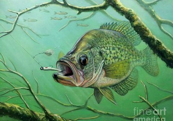 It's National Crappie Day!