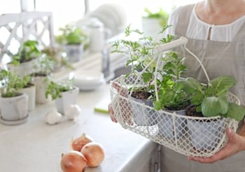 Growing an Indoor Garden