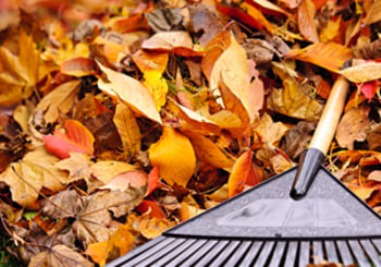 Maintaining Your Landscaping in a Changing Season
