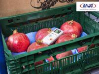 TESTO 184 T3 - Monitor de temperatura USB para medios de transporte