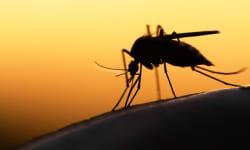 विश्व मलेरिया दिवस 2018 : घर को मच्छर-मुक्त रखने के लिए इन 5 जगहों को रखें साफ़-सुथरा