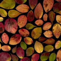 Strahlend schöne Haut im Herbst