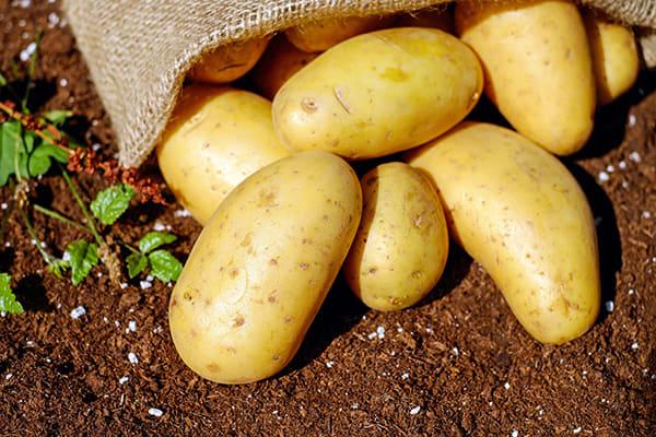 Lederschuhe weiten mit Kartoffeln