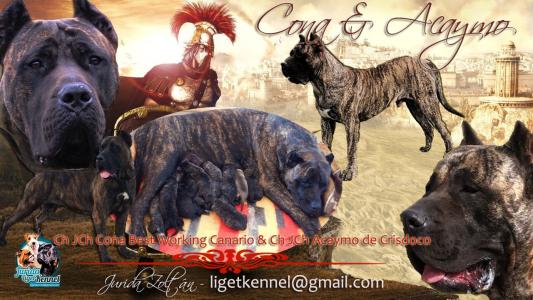 Canary dog - Mara De Presa Jurida Liget