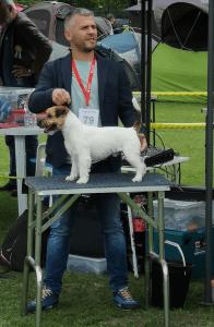 Jack Russell Terrier - Saintandrews Jack Kennel
