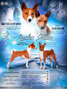 Basenji - Double Quick Lucky Alien