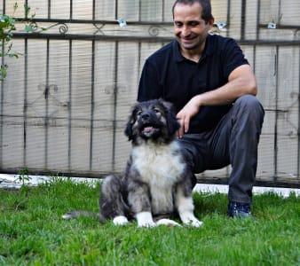 Kavkaski ovčar - Arisa Russtil K.o.