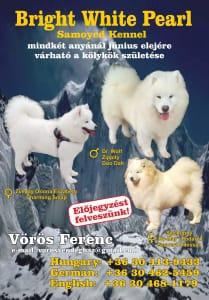Jugoslovenski ovčarski pas - Šarplaninac - Bonbon