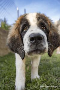 Moscow watchdog - Egresvölgyi Kennel
