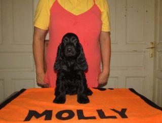 Molly - English Cocker Spaniel Puppy for sale