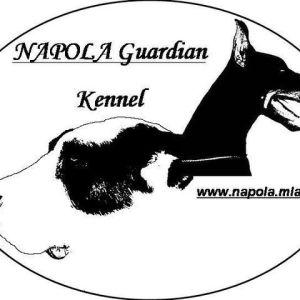 Napola Guardian