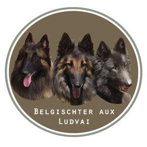 Belgischter Aux Ludvai